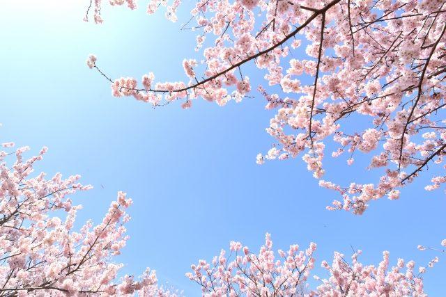 春の婚活応援キャンペーン!4月末まで開催